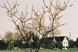 Mandelbäume 2004